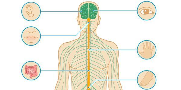 Esclerose Múltipla (EM) – Doença do Nervo Desmielinizante