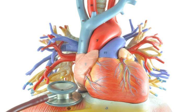 Músculo Cardíaco Inflamado