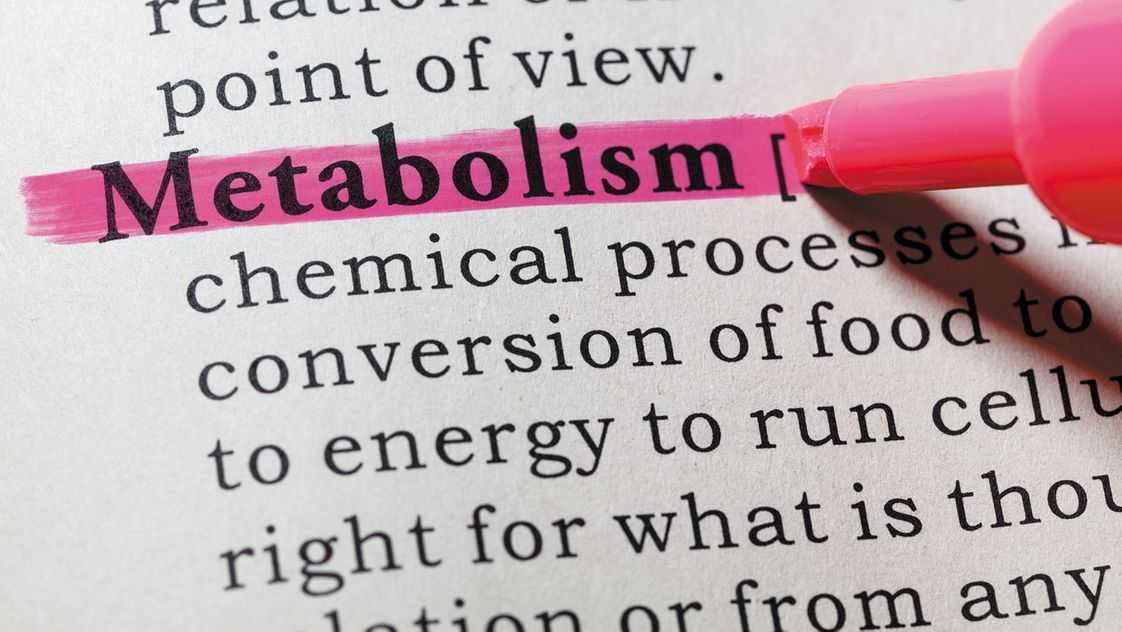 Metabolismo e taxa metabólica basal explicada