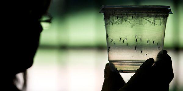 Surto de vírus zika, propagação, sintomas, testes, tratamento