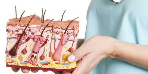 folículos pilosos - glândulas sudoríparas e glândulas sebáceas - na pele