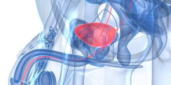 glândula da próstata