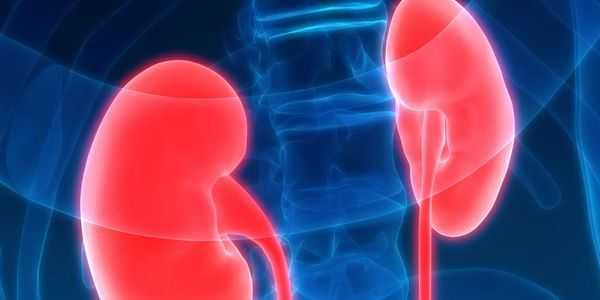 níveis elevados de ureia no sangue-azotemia-uremia