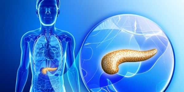 pancreas-function-what-does-the-pancreas-do