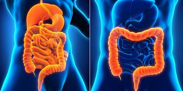 Colite (Aguda e Crônica) Causas, Tipos, Sintomas, Diagnóstico, Tratamento
