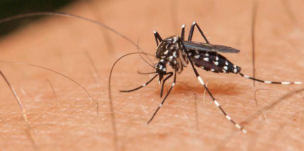 Doenças Transmitidas por Mosquitos, Propagação, Localização, Recuperação