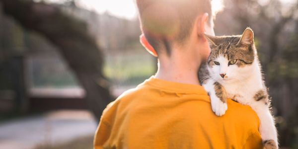 Febre do Risco de Gato (Doença de Catscratch, CSD)