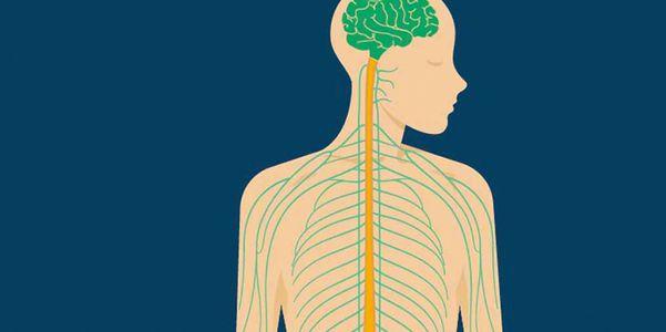 Função do nervo craniano, testes e sintomas de doença