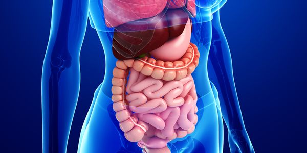 Hemorragia Gastrointestinal Inferior (Intestino)