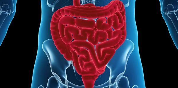 Infecção intestinal (pequenas, grandes intestinos) causas, sintomas, tratamento