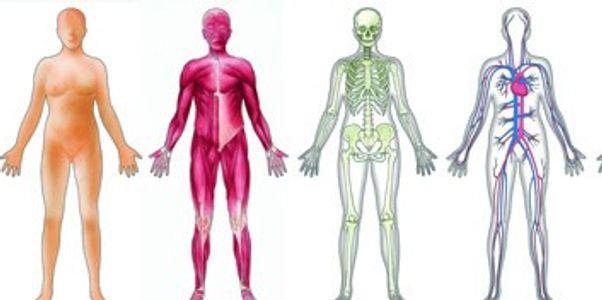 Lista de parasitas do corpo humano – sintomas, fotos