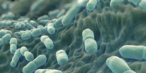 Listeriose (Listeria Bacteria Outbreak) Espalhe, sintomas, tratamento