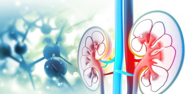 Oliguria e Anuria vs Nocturia Significado e Causas