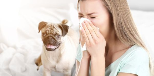 Pet Alergias (Cat e Dog Allergy) Causas, Sintomas, Testes, Tratamento