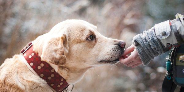 como é a gripe transmitida entre seres humanos aves porcos cães e gatos