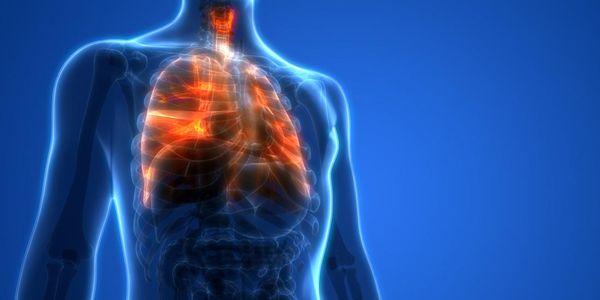 diafragma tórax humano localização anatomia função e posição