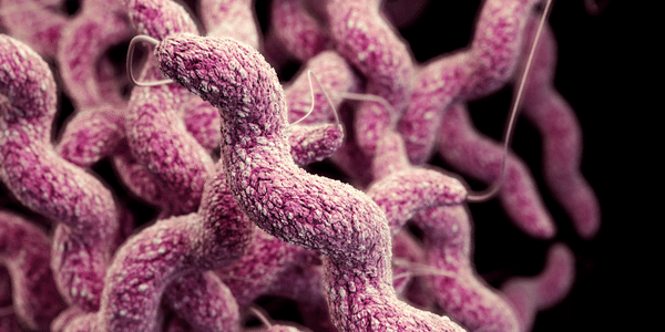 diarréia campylobacter causa tratamento dos sintomas
