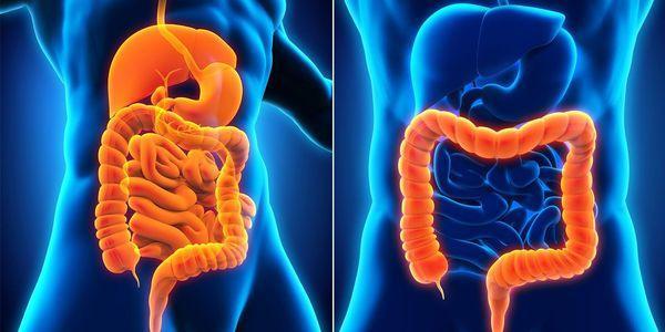 enterite inflamação do intestino delgado aguda e crônica
