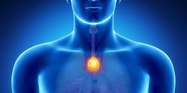 função da glândula timo localização anatomia e peças