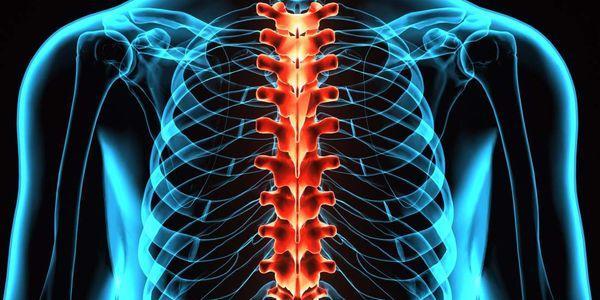 funções composição composição circulação csf líquido cefalorraquidiano