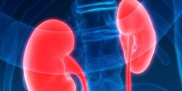 glomerulonefrite doença glomerular renal aguda e crônica