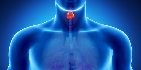 lista de sistema endócrino humano de glândulas e funções hormonais