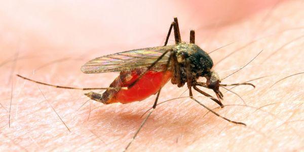 malária causa tratamento de prevenção de sintomas de disseminação