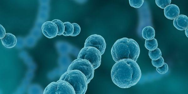 microorganismos tipos efeitos nocivos sobre as imagens do corpo humano