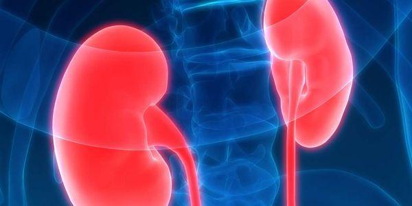 nefrite renal inflamação tipos sintomas complicações