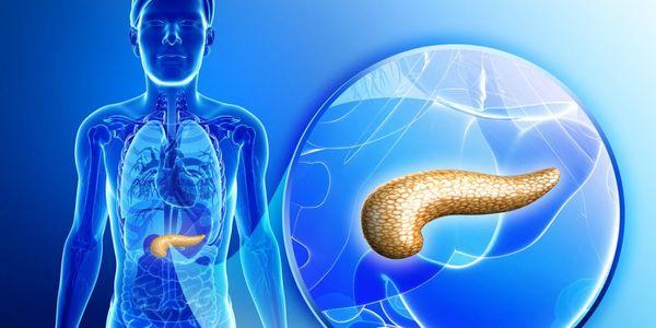 pâncreas localização anatomia partes ducto pancreático e posição