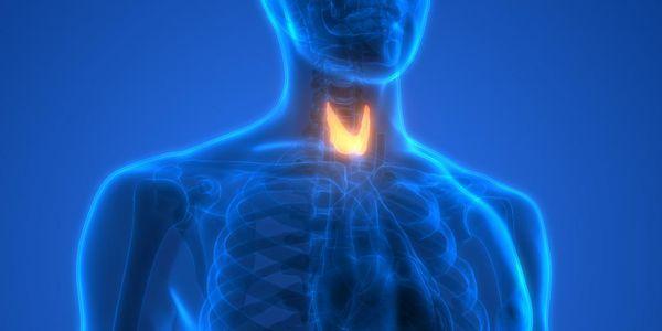partes e imagens da anatomia da posição da glândula de tiróide