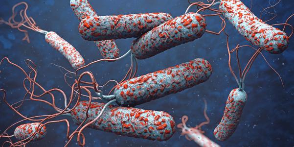 sinais de doença do cólera e como prevenir a cólera