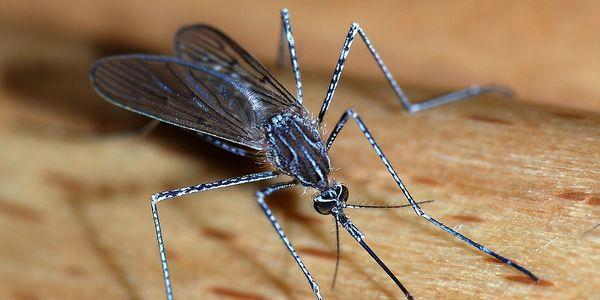 tipos de doenças de mosca doméstica espalhados e prevenção