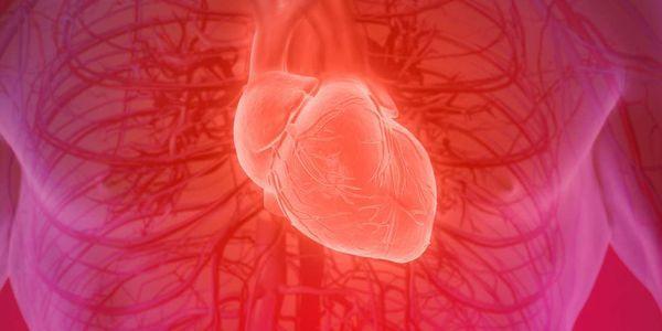 vasos sanguíneos artérias veias estrutura diagrama função